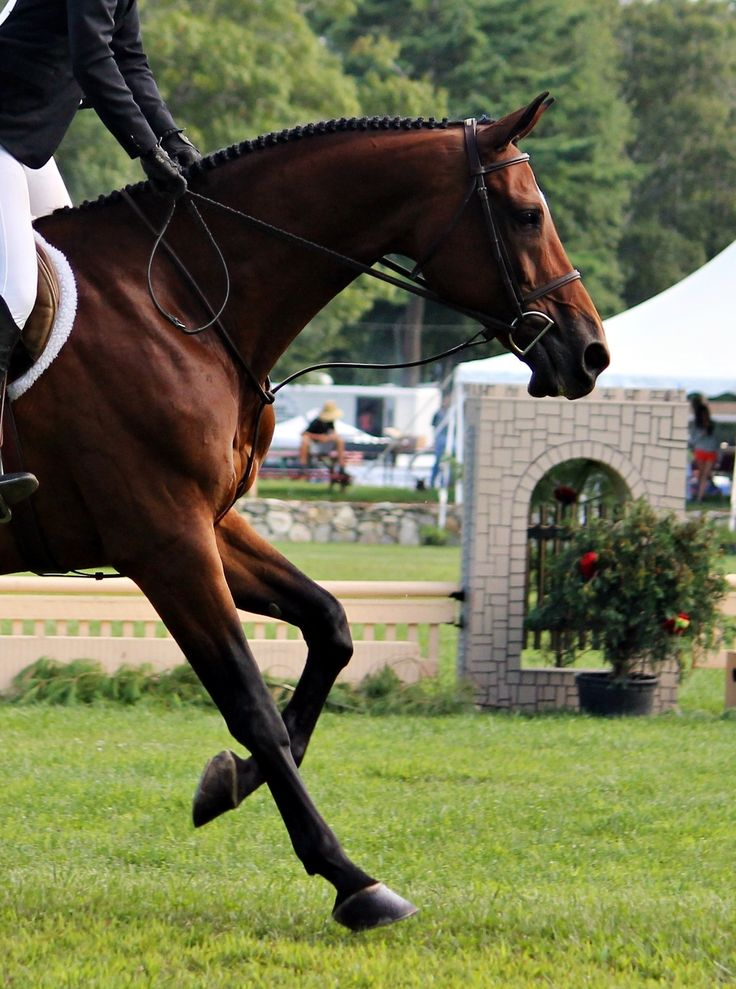 With his ears at full attention and his gaze firmly fixed ahead to the next jump, one can tell this horse is enjoying his job!