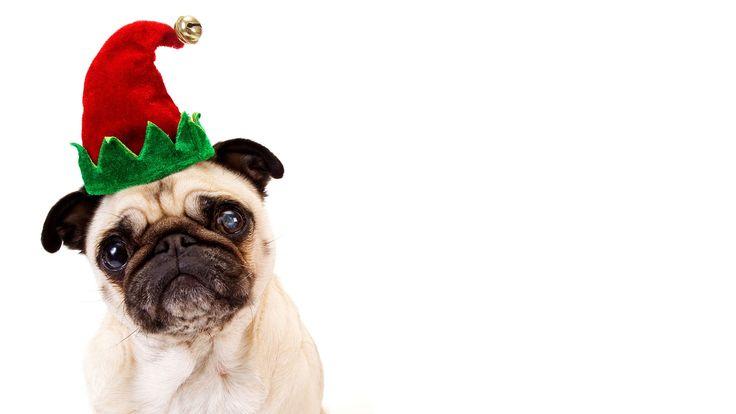 christmas pugs wallpaper Google Search Мопс, Собаки