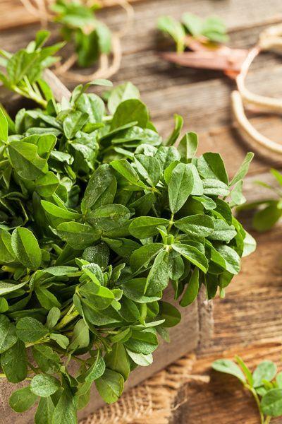 Raw Organic Fenugreek Methi Leaves by Brent Hofacker on 500px