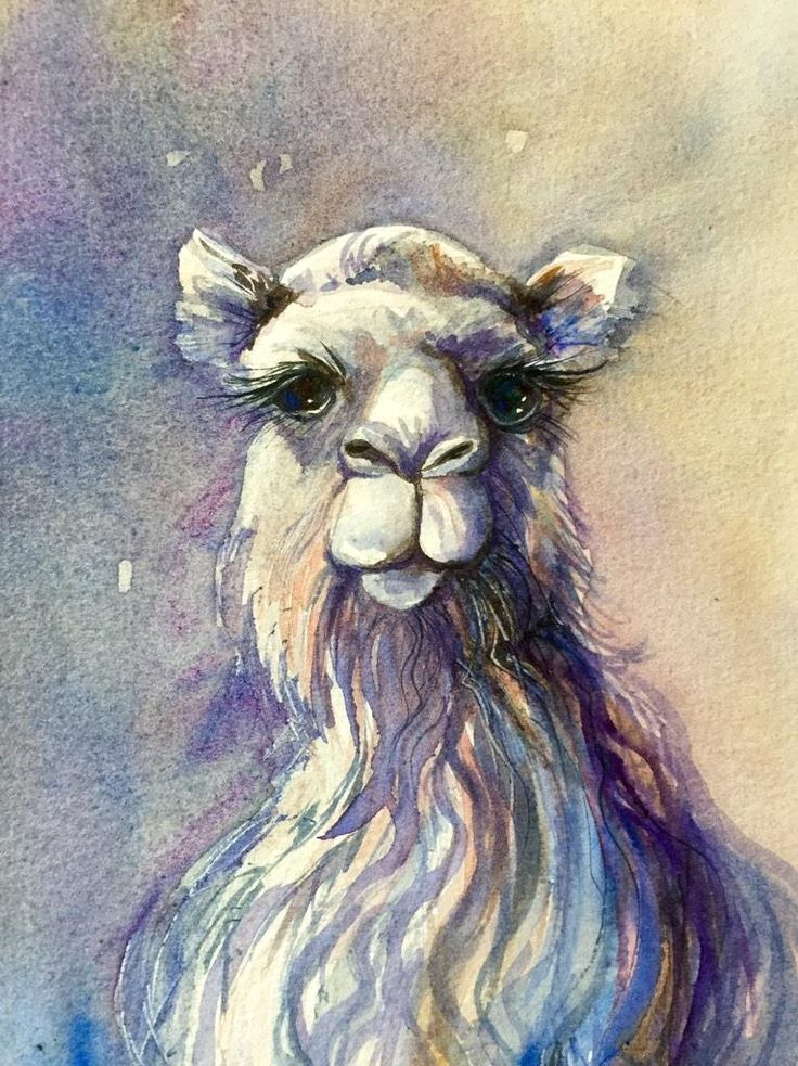 "Linda MacAulay (@LindaMacArtist) | Twitter  ""Gentle Soul""  Camel in Watercolour by Linda MacAulay"