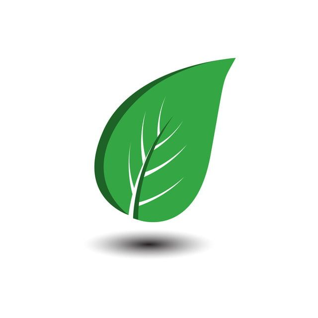 Green Leaves Vector Icon Design On White Background Various Shapes Of Green Leaves Of Trees And Plants Elements For Eco And Bio Logos Plant Clipart Abstract Vector Icon Design Leaves