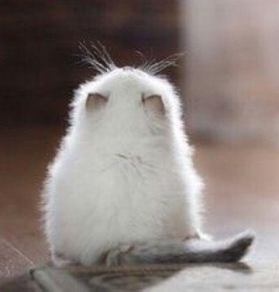 Too cute ! More