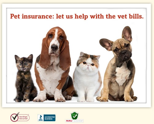 Thinking about pet insurance? Get a free quote from Trupanion here! Visit www.creaturehealth.com for more information.