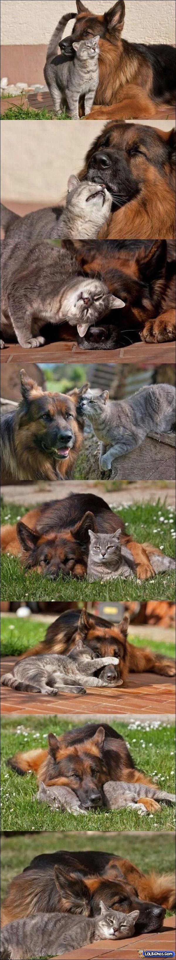 Adorava que a minha cadela e a minha se dessem assim