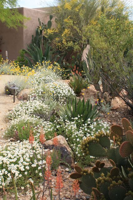 Shade Garden Ideas Front Yards Drought Tolerant