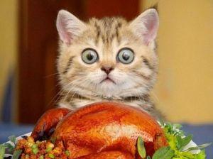 Wow....Turkey!