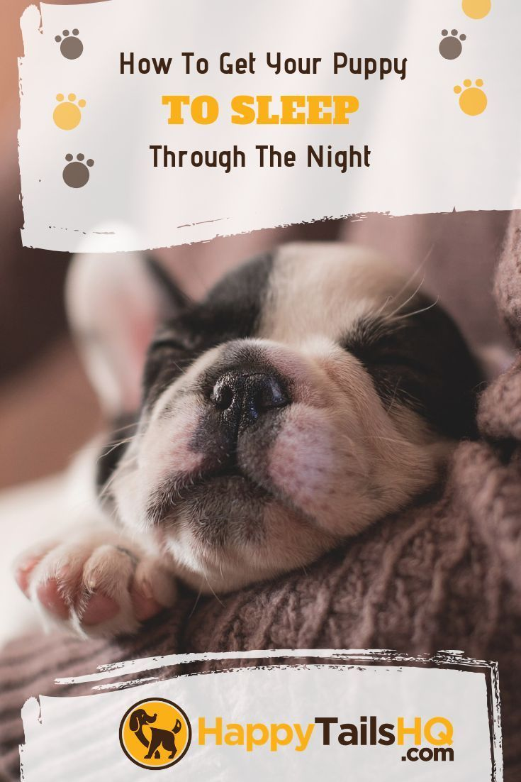 How To Get Your Puppy To Sleep Through The Night Getting A Puppy Training Your Dog Puppies