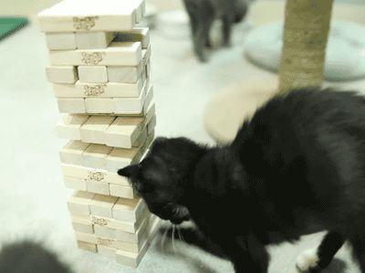 Brave Move, Cat