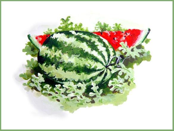 Vintage Watermelon 65