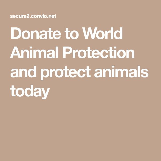 Donate to World Animal Protection and protect animals today