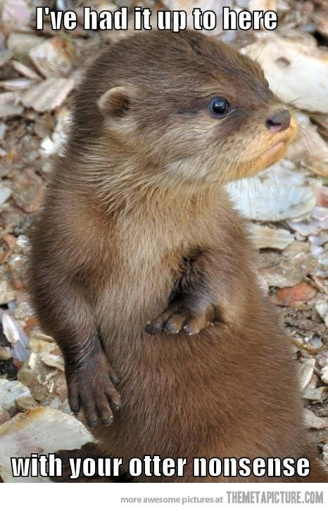 Otters are just way to freaking adorable for their own good. | See more about otters.