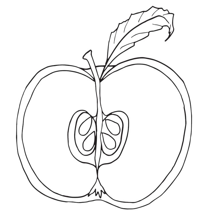 Parts Of An Apple Coloring Pages Nomenclature Cards Notebooking Labeling Worksheet