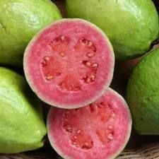 """Pink or red guava is a good source of lycopene. Guava is sometimes called a """"superfruit,"""" as it has many health benefits. It can contain up to four times the amount of vitamin C found in oranges as well as vitamin A, and guava seeds are a source of omega-3 and dietary fiber. Guavas can be grown indoors in temperate climates. They can be juiced, made into jams or eaten fresh."""