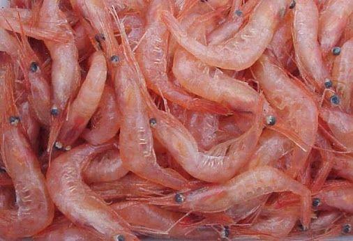 El chitosán o quitosano es una fibra alimentaria que se extrae del caparazón de los crustáceos. Tiene la capacidad de absorber la grasa en el estómago y eliminarla junto con él sin ser digerida. También ejerce un potente efecto saciante al absorber gran cantidad de agua.