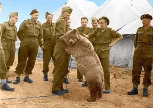 Private Wojtek a bear who faught Nazis in World War 2 with the Polish army. He transported crates of ammunition to the soldiers. This is proof as to why BEARS are so amazing!