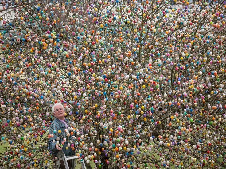 Volker Kraft hangs 10,000 colored eggs in his apple tree March 25 in Saalfeld, Germany.