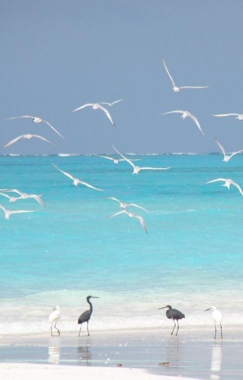 Carolina Beach #beaconhouseinn