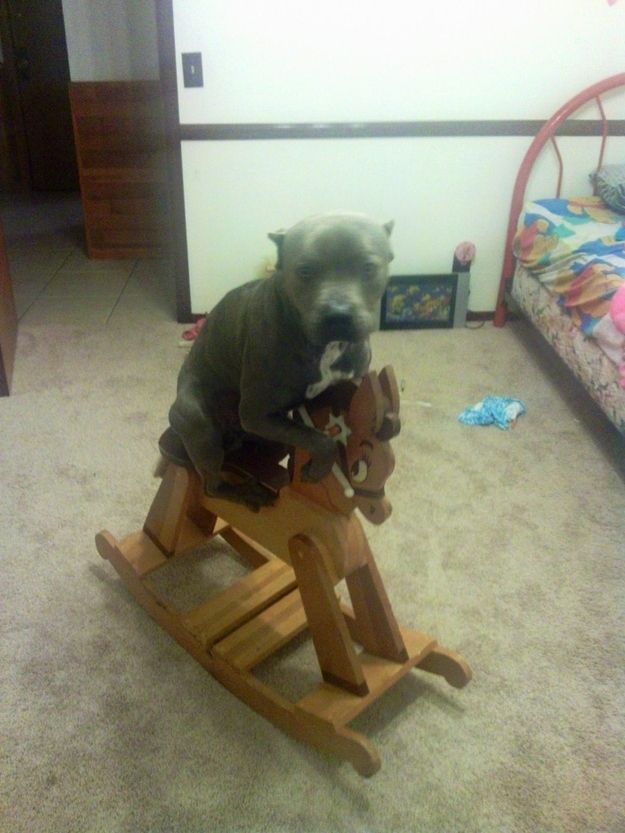 This isn't how you play, dog. Try fetch. | 29 Dogs Who Forgot How To Dog