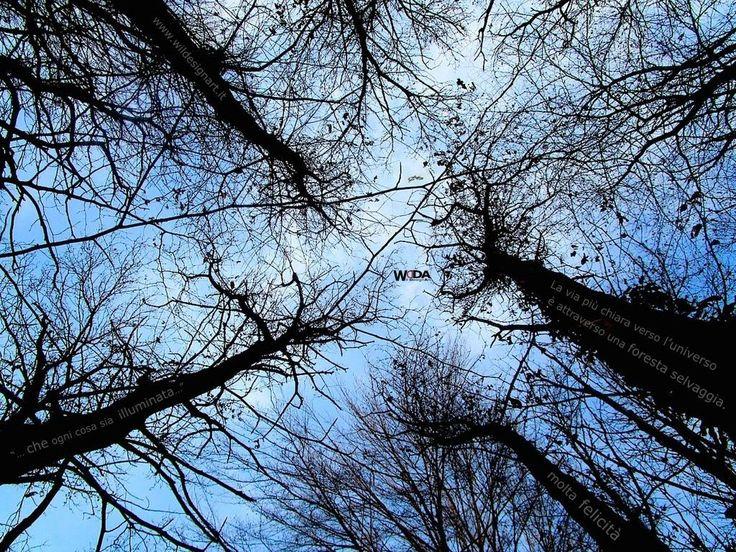 """WDA - WilDesignArt - """"La via più chiara verso l'Universo è attraverso una foresta selvaggia"""" John Muir"""