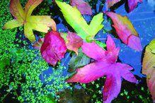 dubbele kaart 231 - herfstbladeren - brechtje duijzer