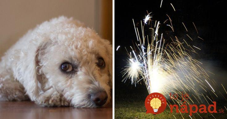 Oslavy konca starého roka a vítania toho nového sa nezaobídu ani bez pyrotechniky, ktorú obzvlášť neznášajú domáci miláčikovia. Existuje však jednoduchý spôsob, ako ich uchrániť bez silvestrovským stresom.