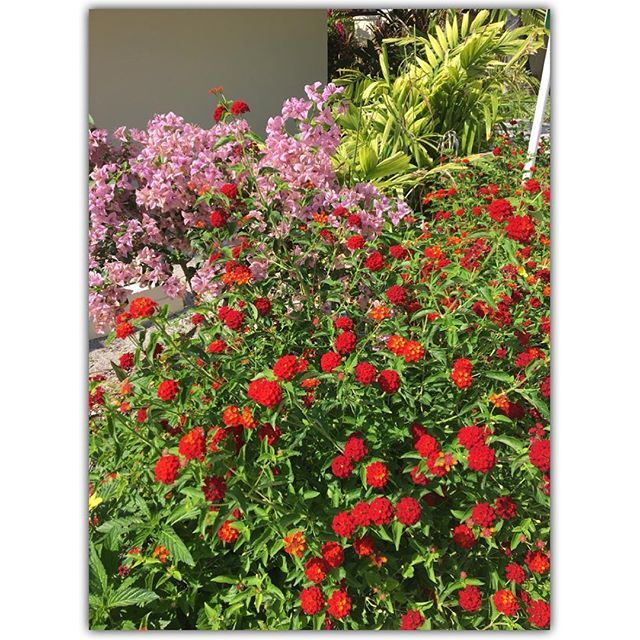 beautiful flowers @kurumba_maldives @emirates @kurumbamaldive @sheratondubaicreek #kurumbamaldives #emirates #honeymoon #25weddinganniversary #maldives #vienna #austria #igers #igersvienna #igersaustria #discoveraustria #igersoftheday #ig_vienna #picoftheday #instagood #photooftheday #instagram