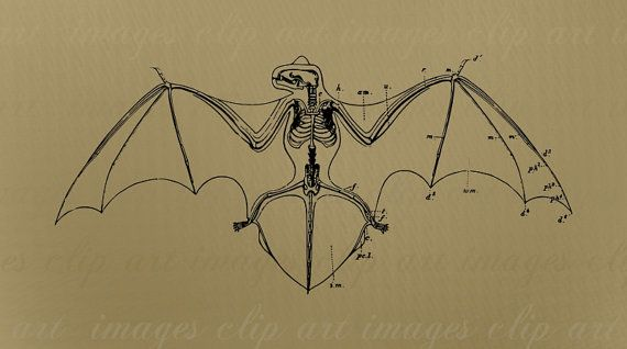 Bat Clip Art, Diagram of Skeleton, Royalty Free, Commercial Use, No Credit Required