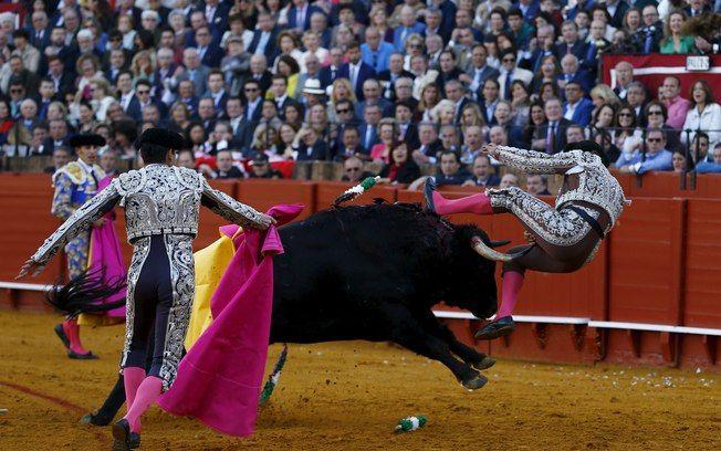 Momento em que touro atinge violentamente