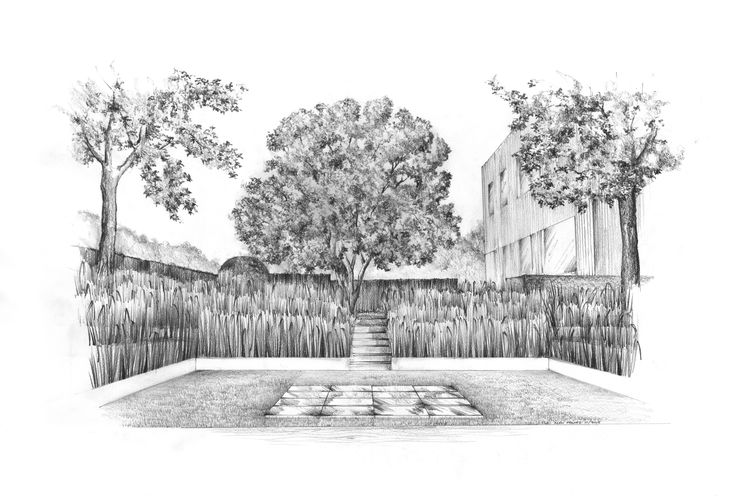 Long island garden grass amphitheatre pencil drawing alan hughes