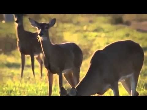 """National Geographic.. Nature : {The Private Life of Deer}""""Documentary"""
