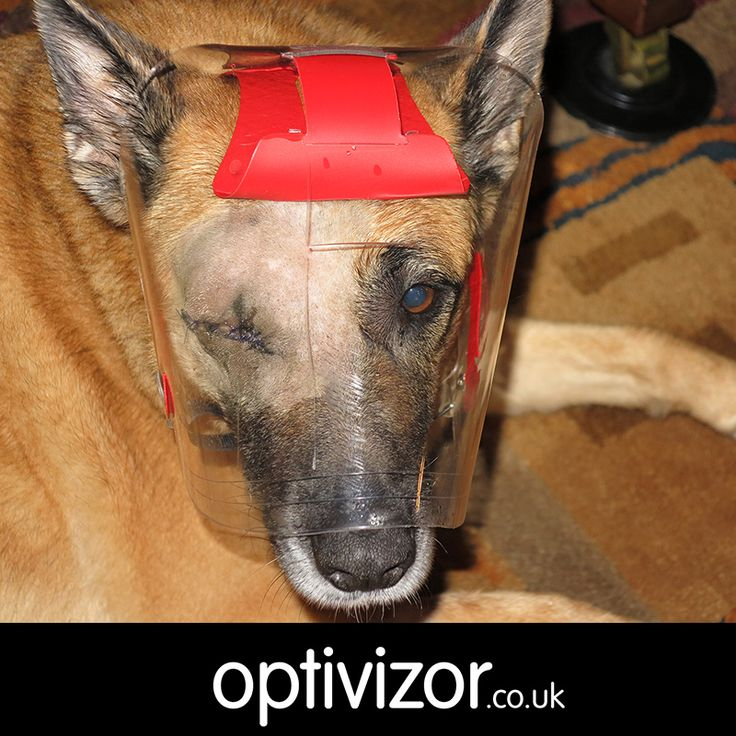Best Dog Cone Reviews