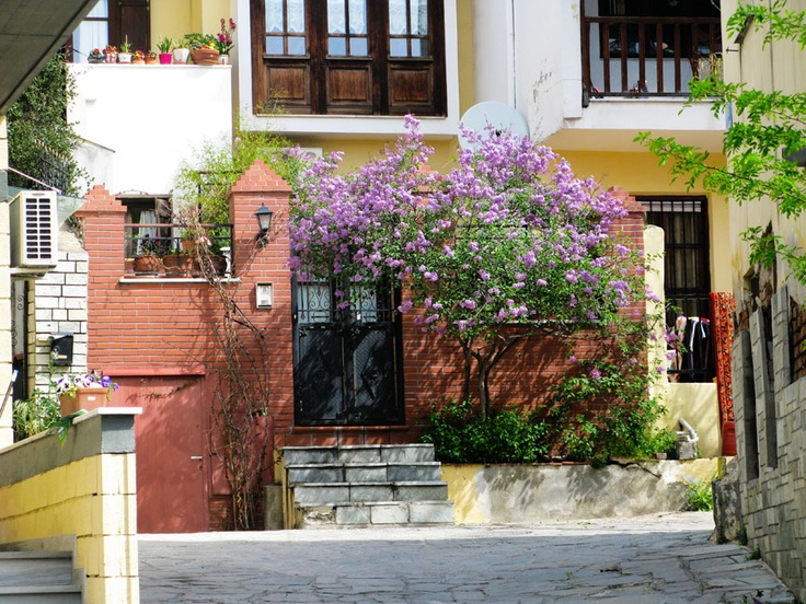 lilacs in bloom at the Old Town of Thessaloniki ( Ano Poli )