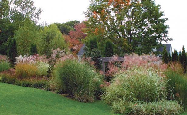 11 best gardening with grasses images on pinterest back for Large grasses for landscaping
