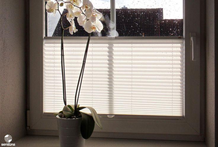 Ein maßgefertigtes sensuna® Plissee Rollo am Fenster - ein Kundenfoto