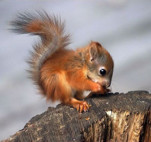 Baby Squirrel   Puppies and kittens and other nice things   Le Salon du peuple pour le ...