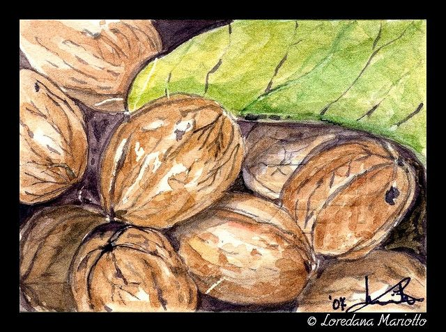 Nuts - ACEO