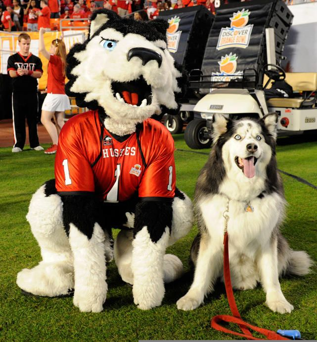 """Northern Illinois University Huskies, Victor E. Huskie. NIU began athletic competition in 1899 and were nicknamed the Profs. In the 1920s they were referred to as the Cardinals. During the 1930s they were called Evansmen after George """"Chick"""" Evans. The huskie mascot was officially chosen in 1940."""