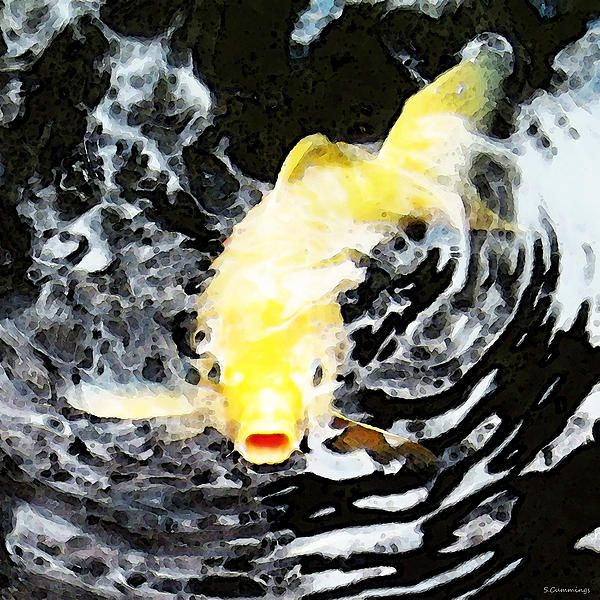 17 best images about koi fish on pinterest koi art for Yellow koi fish for sale
