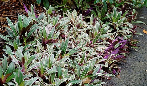 Fast Growing Ground Cover For Shaded Areas