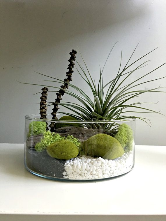 Large Air Plant Terrarium Glass Vase Living By Omorfigiadesigns