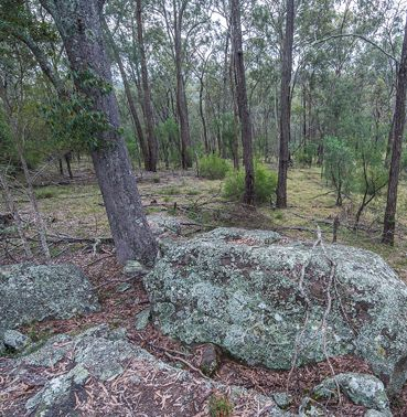 Wirran - rural land for sale – Windsor NSW, Singleton, Rural Real Estate • Nature Conservation Trust of NSW