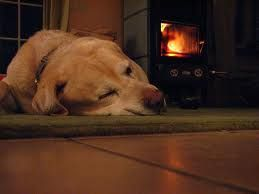 dog in front of fireplace - Google Search