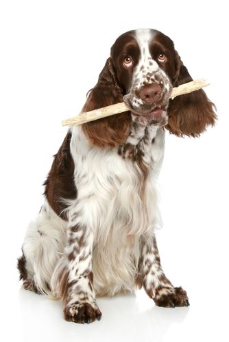 The Dog Trainer : Is Reward-Based Training Too Permissive? :: Quick and Dirty Tips ™