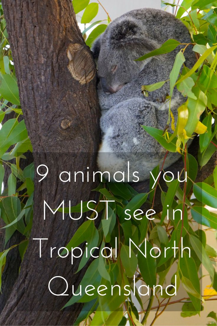 There are just some animals that you have to see when you visit Australia and also Tropical north Queensland.