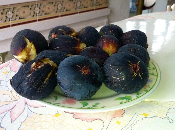 Figner fra min fars figentræ i Spanien