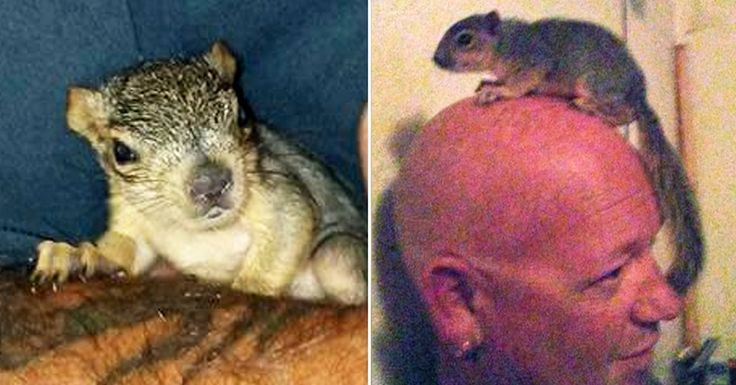 Joey the squirrel wasn't about to let anyone mess with his family's home.