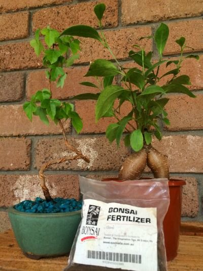 When fertilizing bonsai plants you don't actually need a specialised bonsai fertilizer, any good plant fertilizer will do!