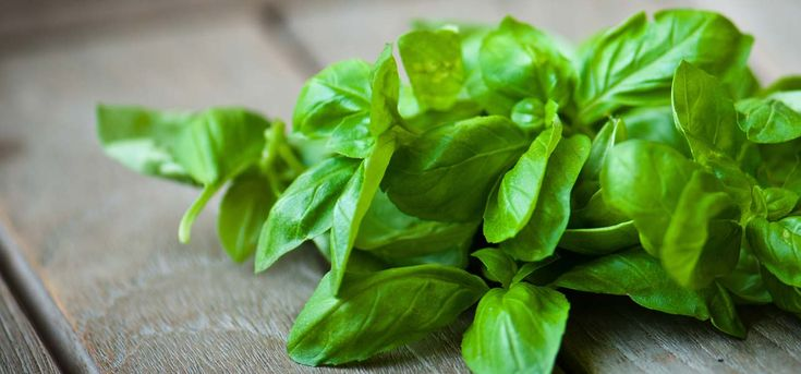 28 Amazing Benefits and Uses Of Basil Leaves For Skin, Hair and Health