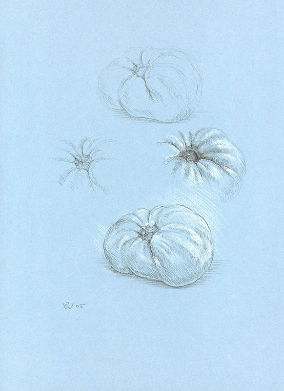 Monochrome Sfumato Tomato 2005 pencil and white chalk on blue-toned paper 37.5 x 27.5 cm by © Susan Dorothea White