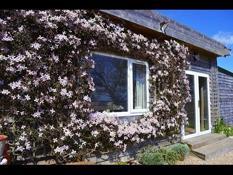 Clematis Cottage, Gurnard Extremely well presented bungalow, close to coast. This immaculately presented bungalow is in a lovely rural location. Its South-facing garden looks out towards Parkhurst Forest, and rolling fields around. Just minutes from both Gurnard seafront and Thorness Bay with their stunning far-reaching views across the Solent and breath-taking sunsets, Clematis Cottage is just a few minutes' drive from Cowes – home of the World-renowned sailing activity throughout the year.